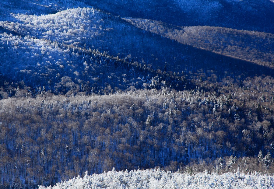 frosted,frosty,frost,forest,winter,blue,white,Algonquin,treetop,Mt Jo,slope,Adirondack,layers, photo