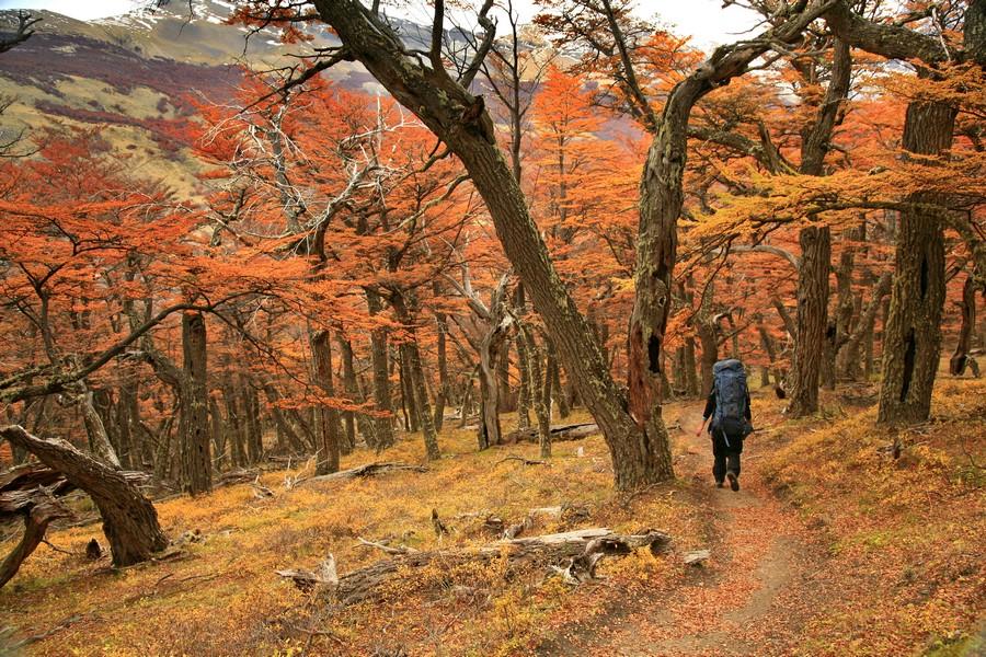 Rio Fitz Roy Valley, Los Glaciares National Park, Patagonia, Argentina, Fitz Roy, backpacking, hiking, autumn, trail, se, photo