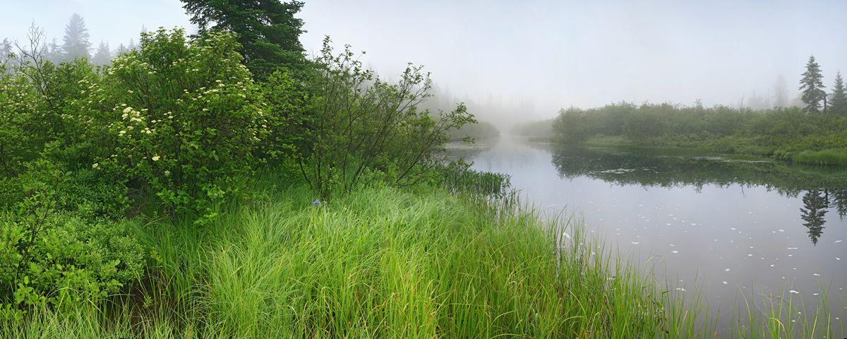Big Brook, Long Lake, grassy, river, bank, misty, morning, iris, Adirondacks, Adirondack Park, photo