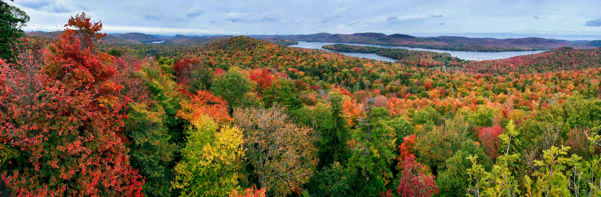 Big Moose Lake, hemlock, treetop, forest, canopy, tree, autumn, panorama, 2009, Adirondack Park, Adirondacks, landscape, Adirondack,Big Moose,, photo