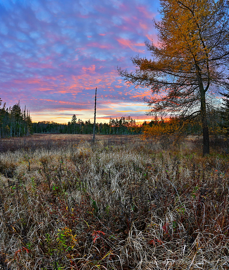Sawyer Mt,Route 30,wetland,bog,November,sunset,tamarack,yellow tamarack,Sawyer Mt wetland,, photo