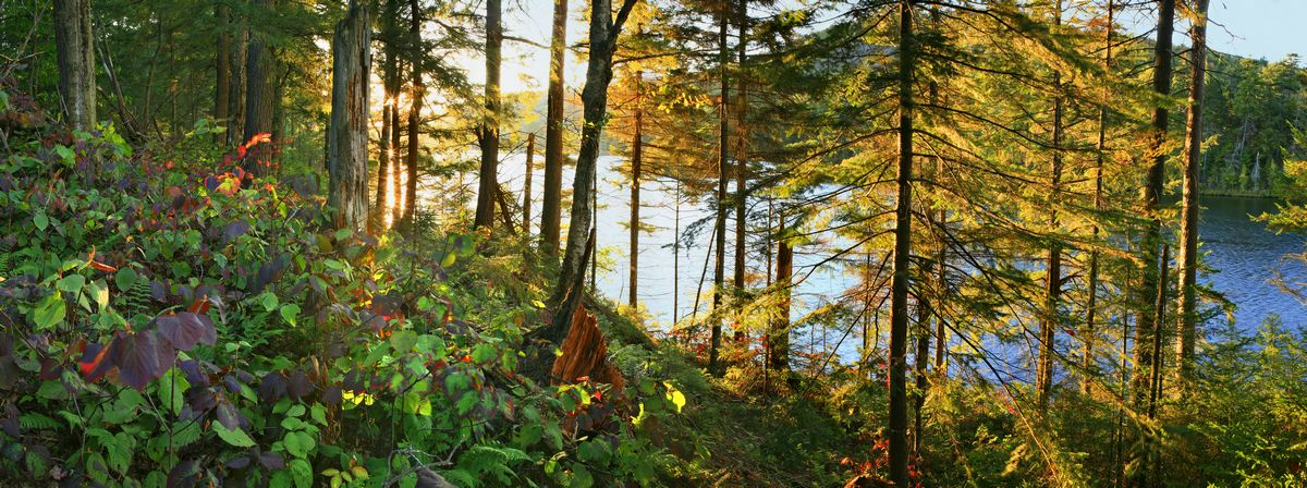 Cascade Lake, forest, sunbeams, sunlit, late, afternoon, photo