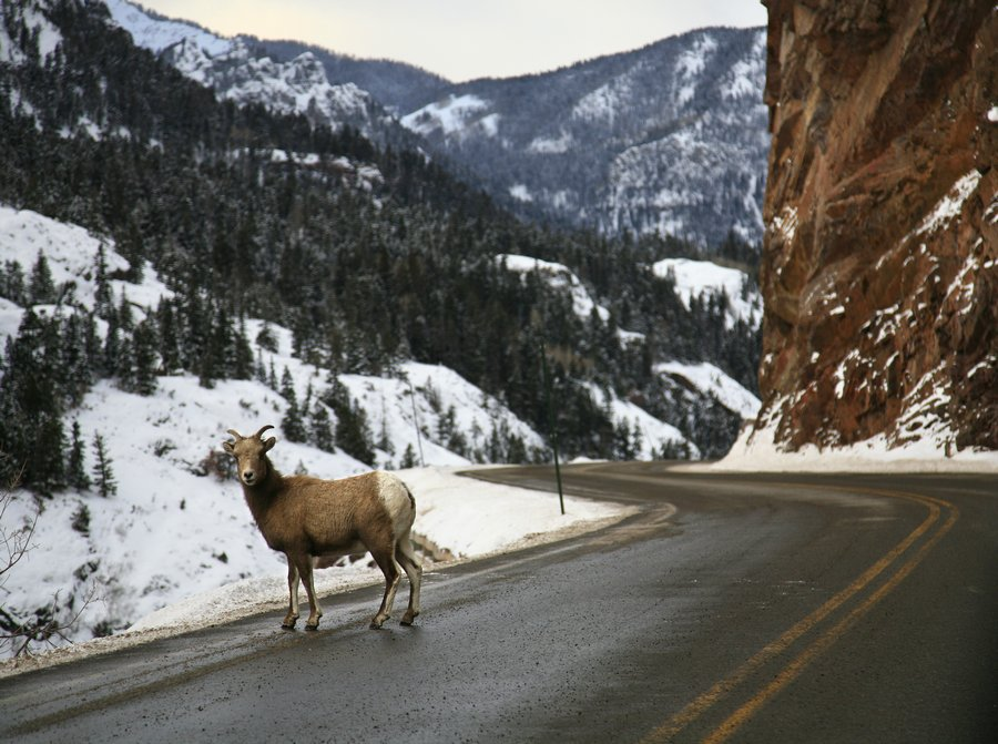 Red Mountain Pass, Ouray, Silverton, pass, mountain, goat, mt. road, Colorado, photo