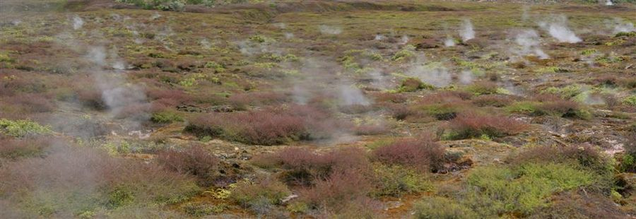 Craters of the Moon, park, Rotorua, New Zealand, steam, vents, ground, geothermal, activity, photo