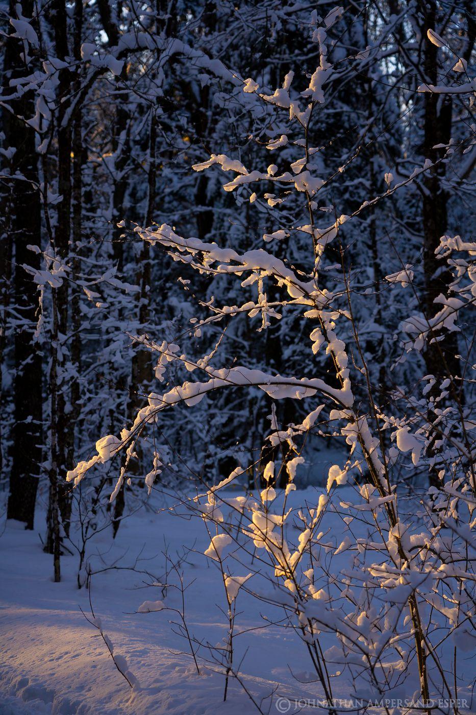 Debar Mt trail snowy forest winter 2020