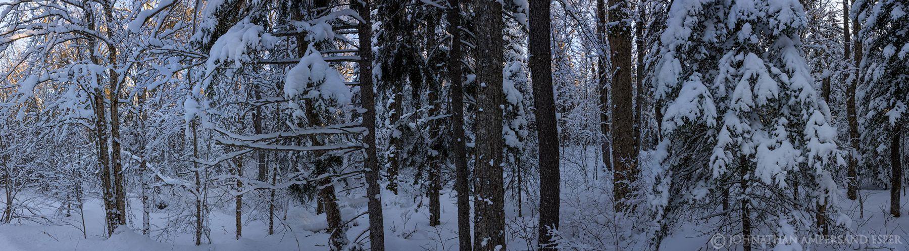 Debar Mt,Debar Mt Trail,snowmobile trail,snowy woods,forest,snowy forest,Debar Mt snowy forest,, photo