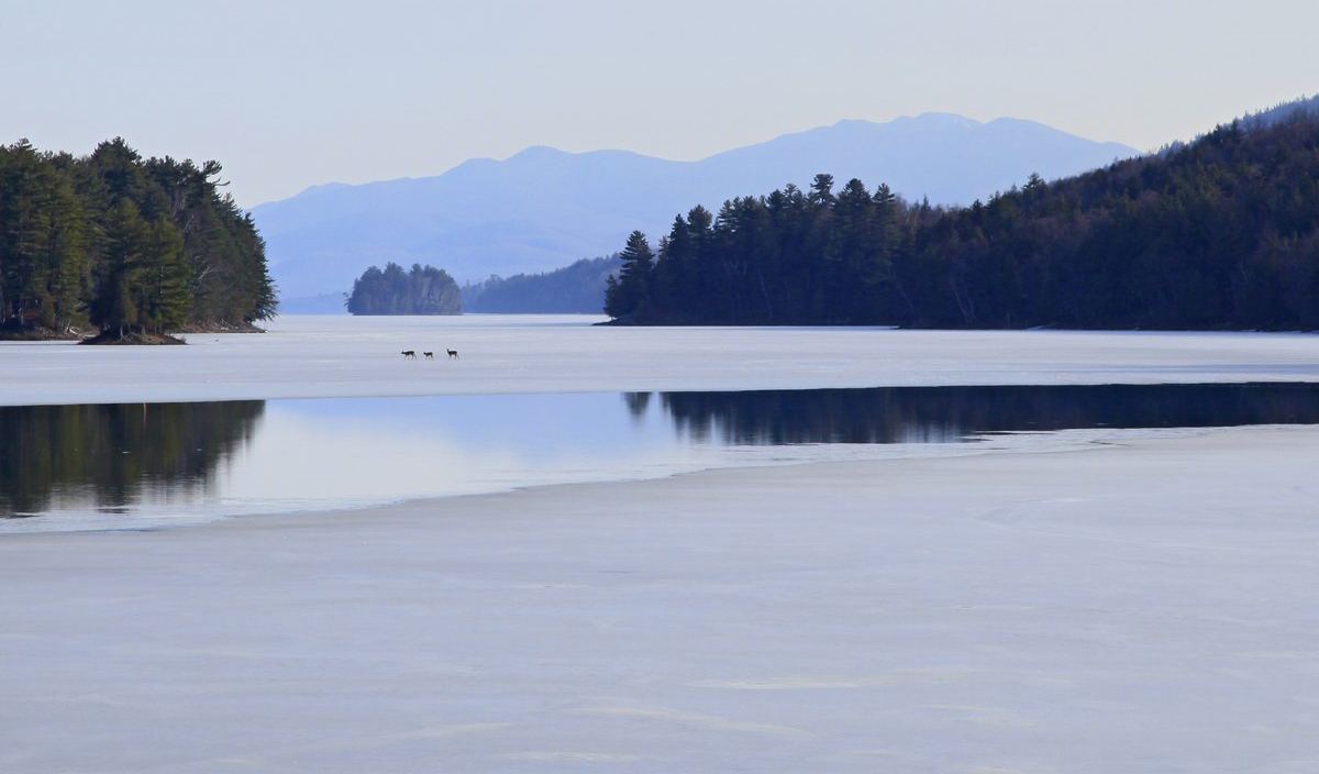 Long Lake,town,of,Adirondack Park,Adirondacks,Adirondack Mountains,frozen,deer,crossing,thin,ice,open,channel,near,walki, photo