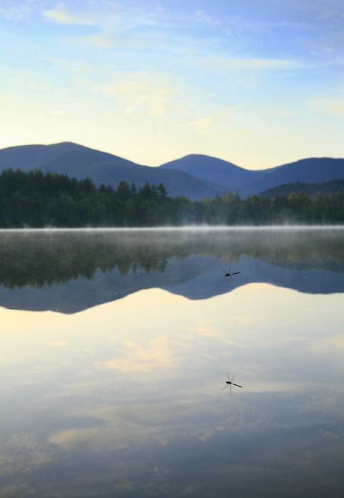 dragonfly, skimming, flying, above, Heart Lake, Adirondacks, High Peaks, reflected, photo