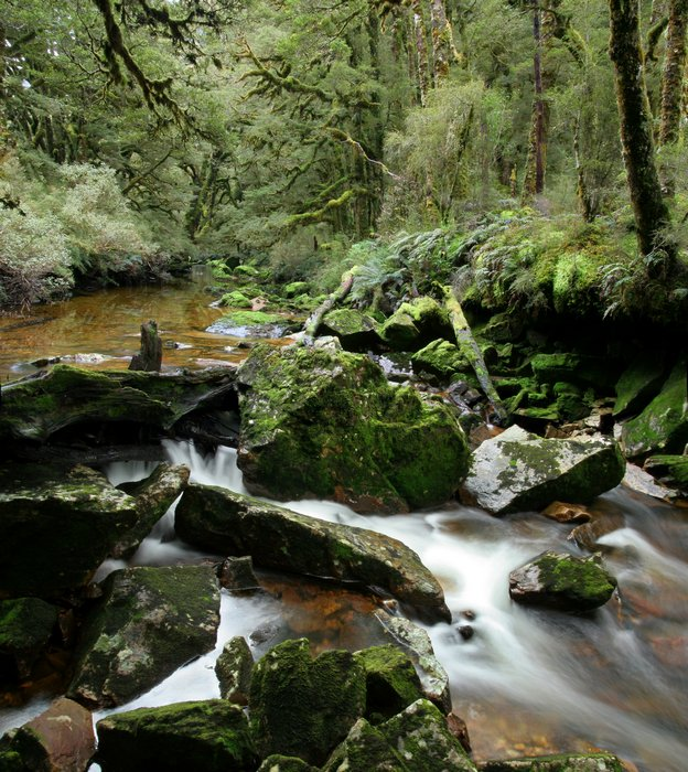 Fiordland National Park, rainforest, temperate, stream, mossy, lush, Dusky Track, New Zealand, photo