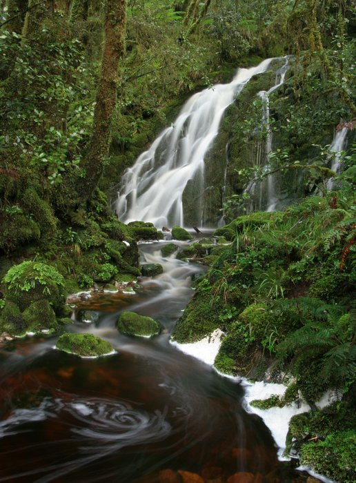 temperate, rainforest, fiordland national park, New Zealand, Dusky Track, lush, ferns, forest, stream, cascade, waterfal, photo