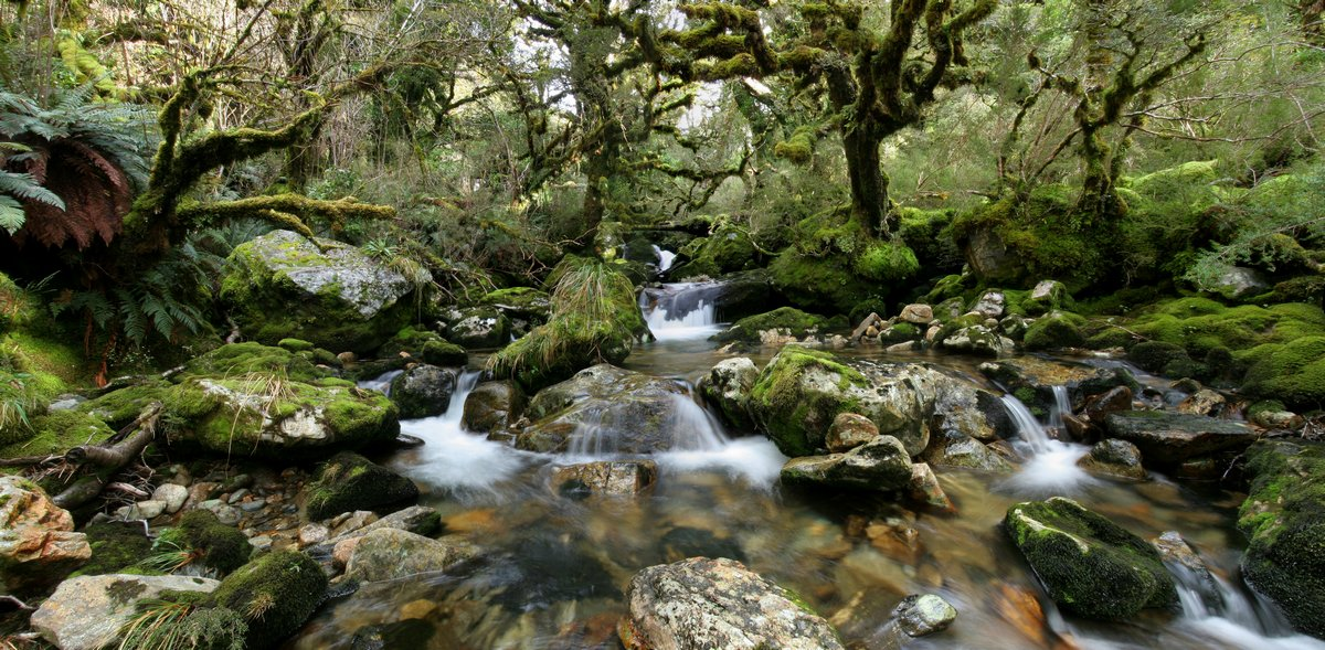 temperate, rainforest, fiordland national park, New Zealand, Dusky Track, lush, ferns, forest, stream, rocky, photo