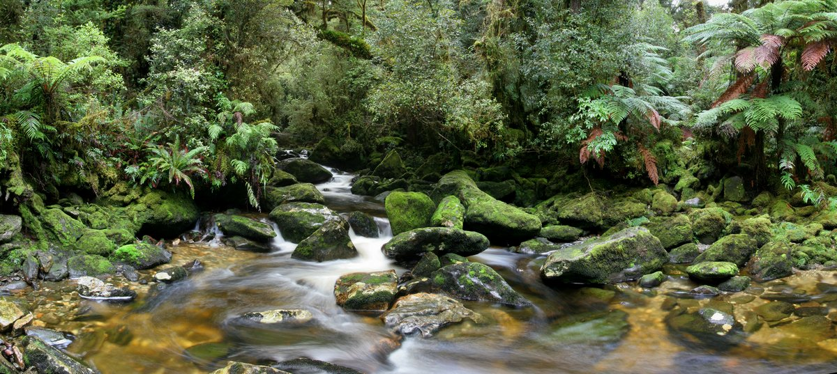temperate, rainforest, fiordland national park, New Zealand, Dusky Track, lush, ferns, forest, stream, moss-covered, mos, photo