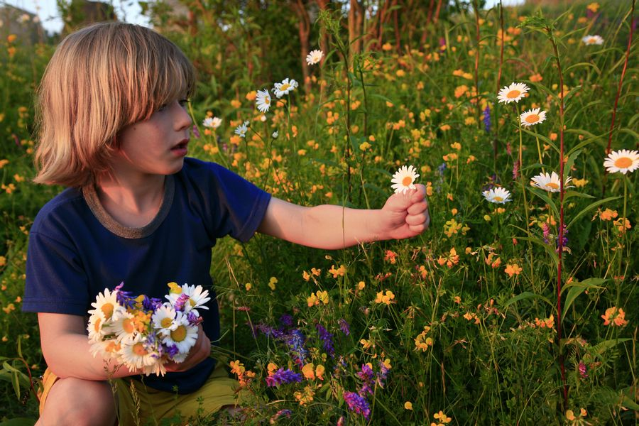 little,boy,pick,picking,wildflowers,flowers,mother's day,wild,daisies,smiling,innocent,daisies,Adirondack Park,child,fie, photo
