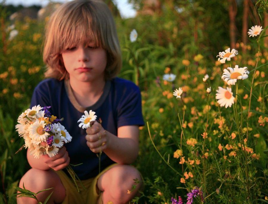 little,boy,pick,picking,wildflowers,flowers,mother's day,wild,daisies,smiling,innocent,daisies,Adirondack Park,child,fie, photo