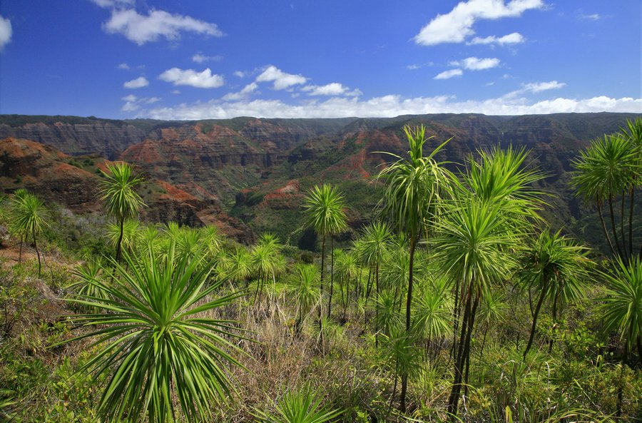Waimea Canyon, Hawaii, photo