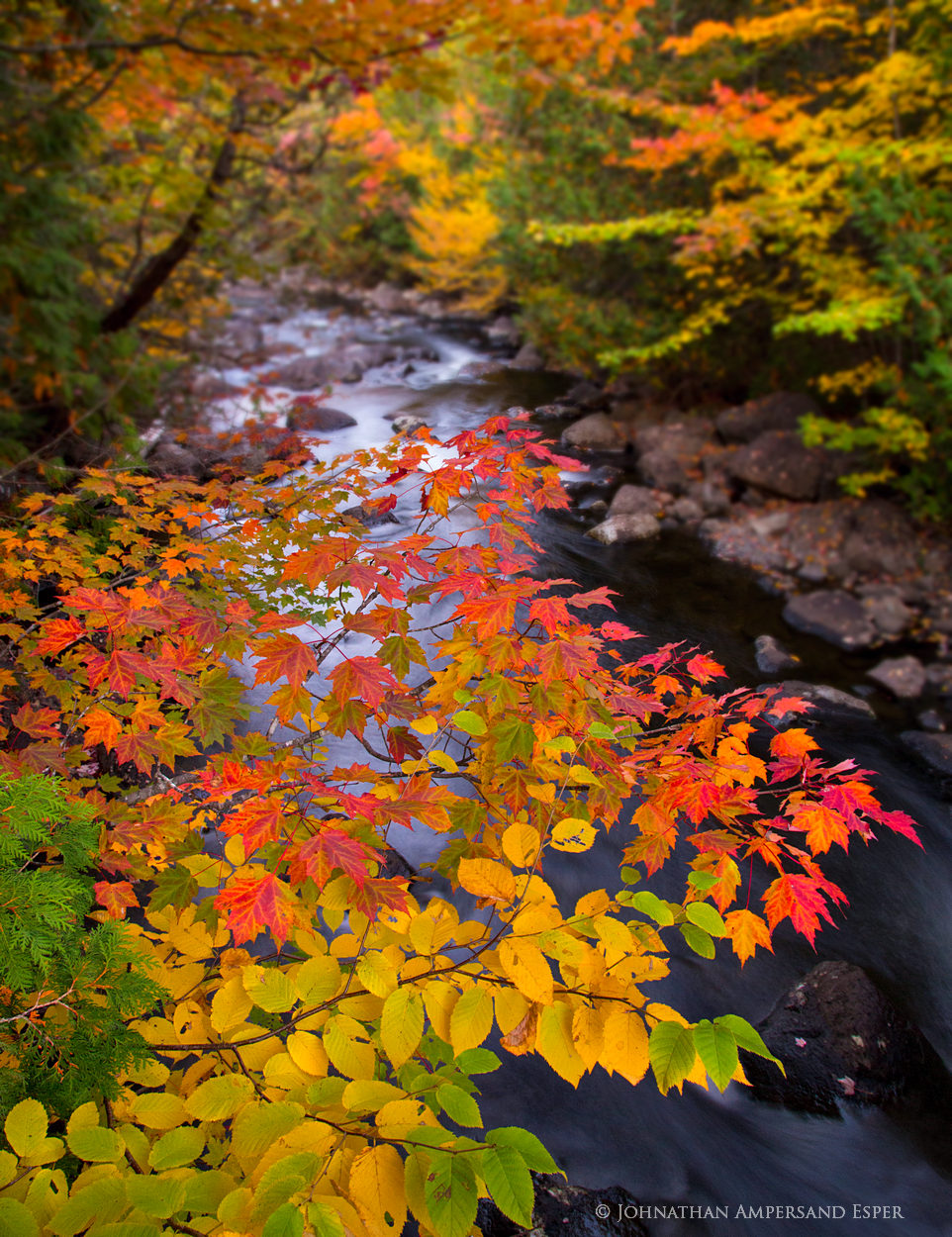 Henderson Lake outlet,Henderson Lake,forest,stream,forest stream,fall,foliage,color,, photo