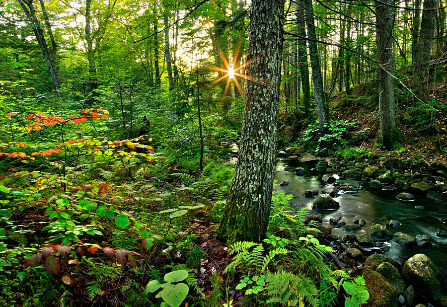 Hewitt Eddy Trail,Boreas River,forest,green,stream,scene,sunburst, photo