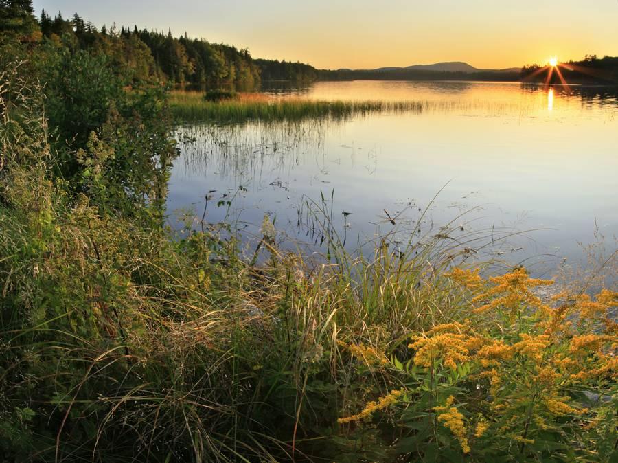dragonfly,hovering,grasses,sunset,summer,Horseshoe Lake,backlit,wildflowers,Adirondack Park,lakes,lake, photo
