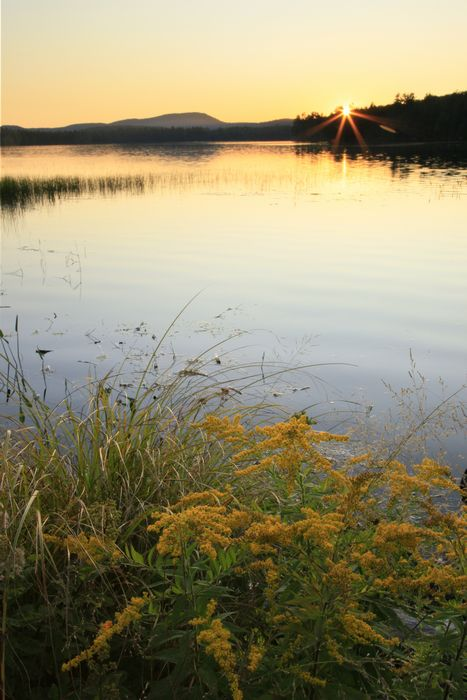 Horseshoe Lake,vertical,lake,Adirondack,Adirondack Park,wilderness,sunset,summer,calm,wildflowers, photo