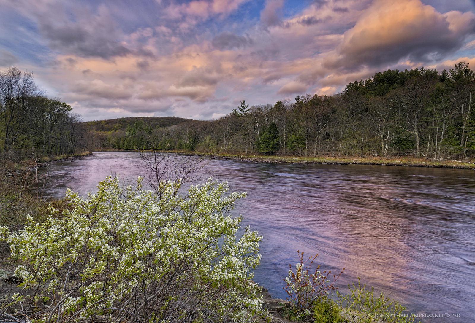 Hudson River,North River,spring,2016,spring 2016,flowering bush,flowers,sunset, photo