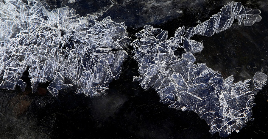 winter,ferns,ice,shapes,formations,frozen,stream,North Creek,black and white,abstract,Ice Shale, in, Space,William Blake, photo