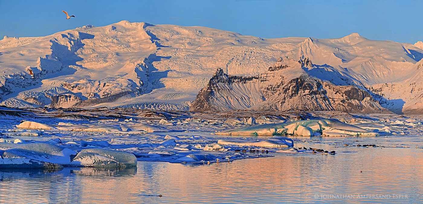 Jokulsarlon,seals,telephoto panorama,Oraefalljokull,sunrise,Iceland,icebers,seals on icebers,glacier lagoon,glacier, photo