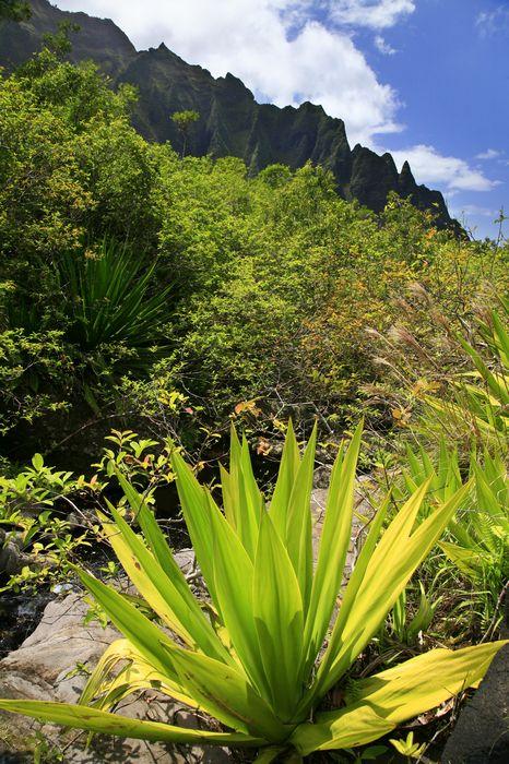vegetation, plants, Kalalau Valley, Na Pali coast, cliffs, tropical, valley, photo
