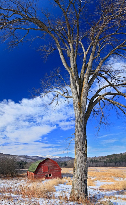 barn,Keene Valley,winter,red,tree,vertical,Cascade Mt,old,sagging,rustic,rural, photo