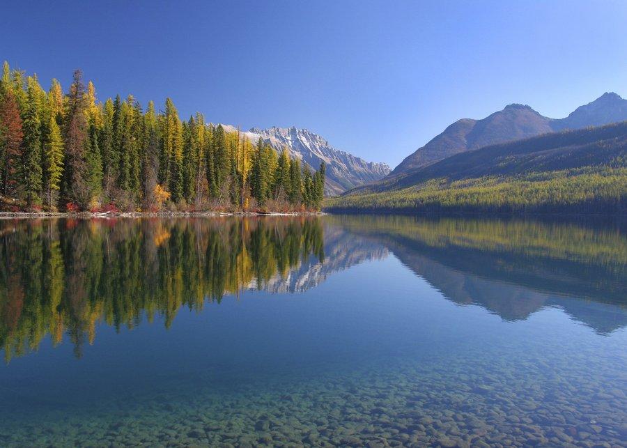 Glacier National Park,Montana,Kintla Lake,yellow,tamaracks,National Parks,autumn,USA,United States,clear,blue,lake,rocky, photo