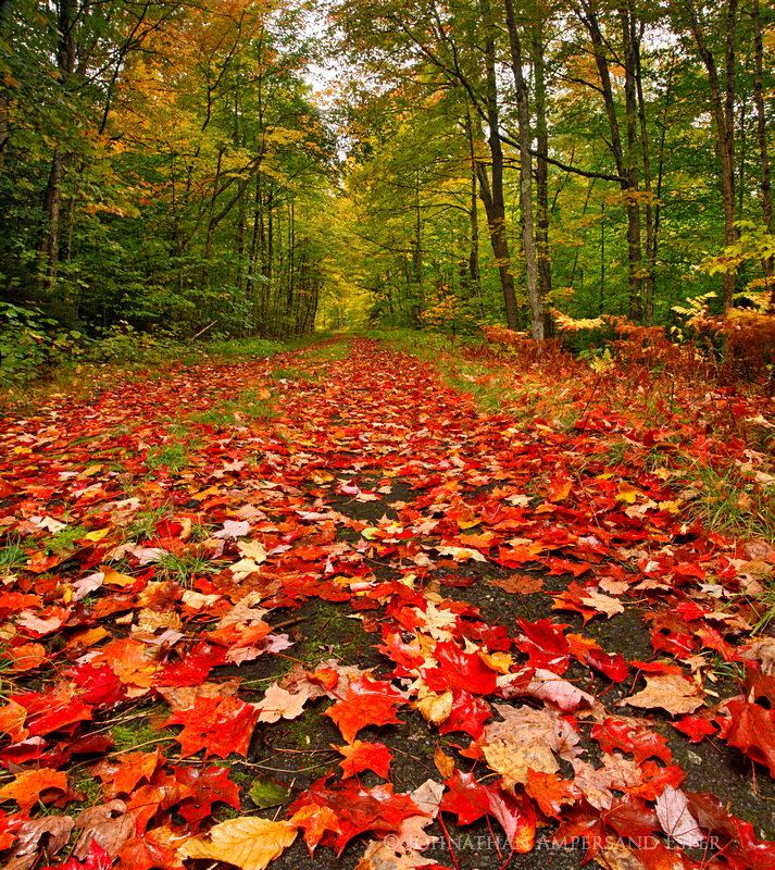 Lake Eaton,logging road,Lake Eaton logging road,Whitney Wilderness,autumn,2012,leaves,wet leaves,rainy,, photo