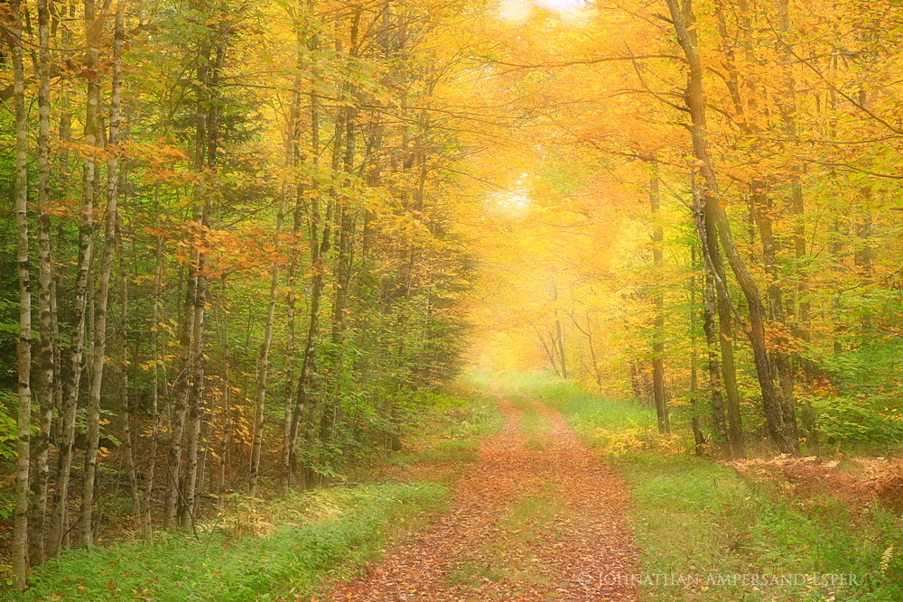 Lake Eaton logging road,logging road,Lake Eaton,soft focus,focus blur,double exposure,2014,fall,autumn road,country lane, photo