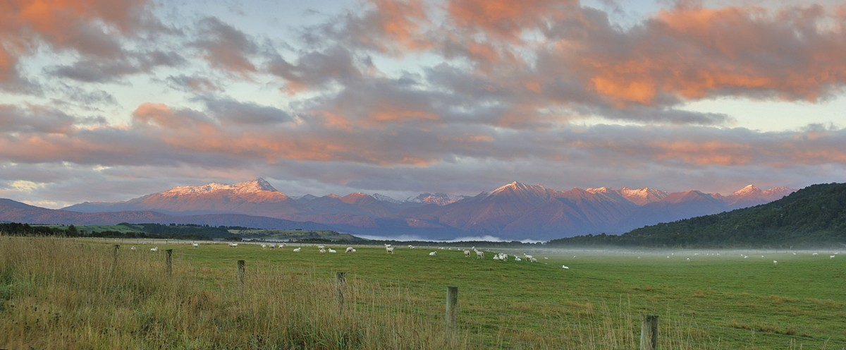 Lake Manapouri,Kepler Mountains,Te Anau,New Zealand,sheep,pasture,sunrise, photo