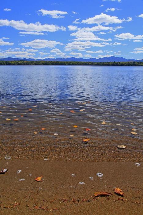 Lake Placid,floating leaves,fall,leaves,clouds