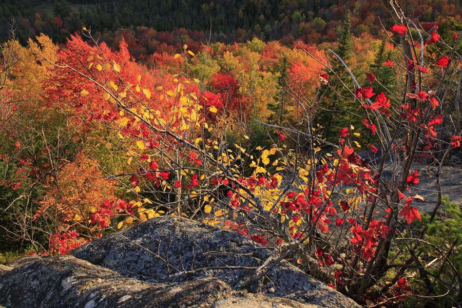 Adirondack Park,foliage,color,sunlit,backlit,strong,colored,fall,leaves,forest,branches,Adirondack, photo