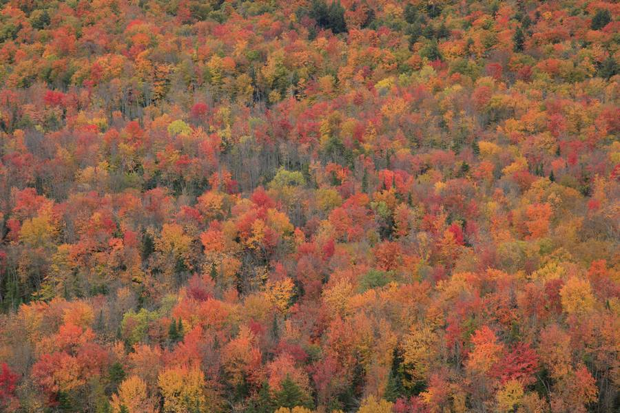 Adirondack,mixed,conifer,deciduous,fall,autumn,color,aerial,view,over,detail,crop,forest,trees,tree,canopy,leaves,color,, photo