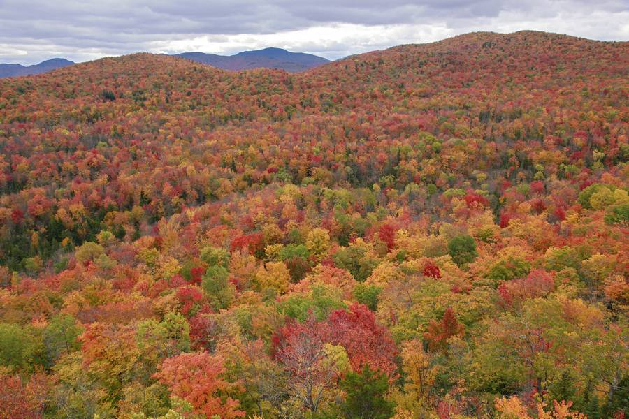 Ledger Mountain,view,treetop,autumn,colors,fall,foliage,leaves,red,colorful,landscape,rolling,mountains,Adirondack Park,, photo