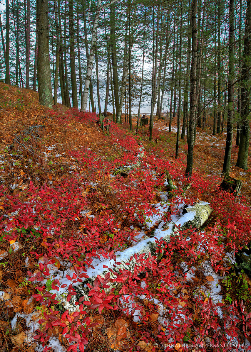 Little Tupper Lake,shoreline,November,late fall,snow,lake,Adirondack Park,red blueberry bushes,blueberry bushes,blueberry,bushes,birch log,log,forest, photo