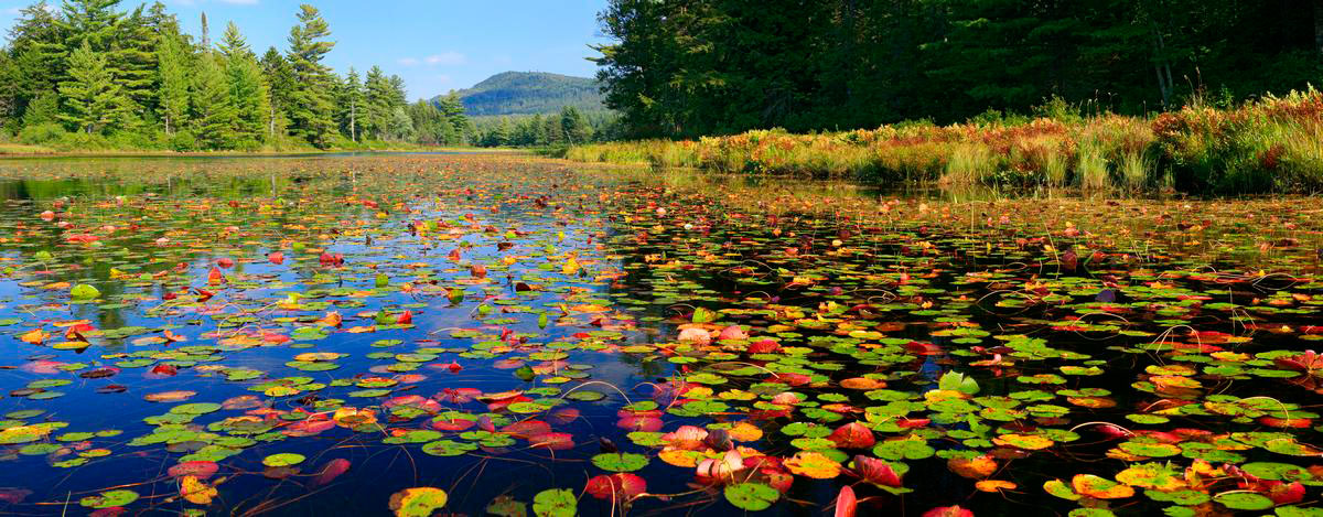 Little Tupper Lake outlet,Little Tupper Lake,outlet,lily pads,Round Lake,Whitney Wilderness,Johnathan Esper, photo