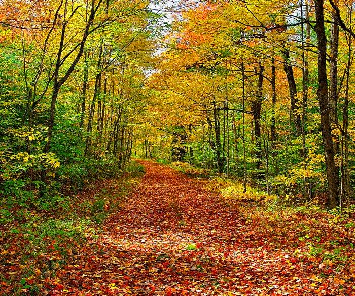 logging road,Lake Eaton,fall,autumn,leafy,covered,leaf,near,Adirondacks,road,lane,, photo