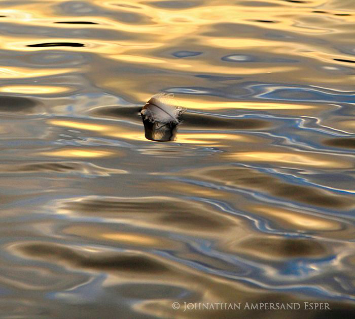 loon feather,floating,Fourth Lake,golden,water,golden water,loon,feather,sunrise,light,2012, photo