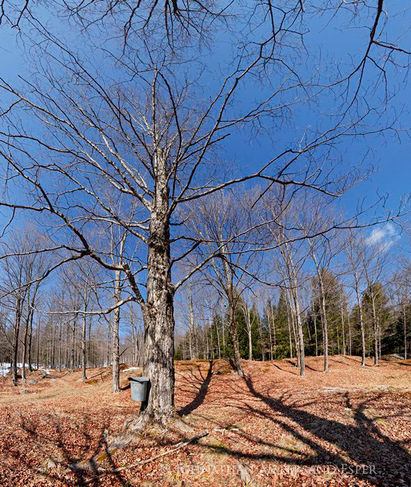 Adirondack Gold Maple Farm,maple farm,Thurman,maple,syrup,bucket,tin,traditional,springtime,spring,farm,sugar maple,, photo