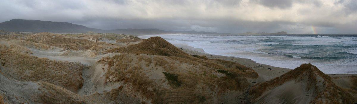 Mason Bay, sand dunes, Stewart Island, kiwis, New Zealand, photo