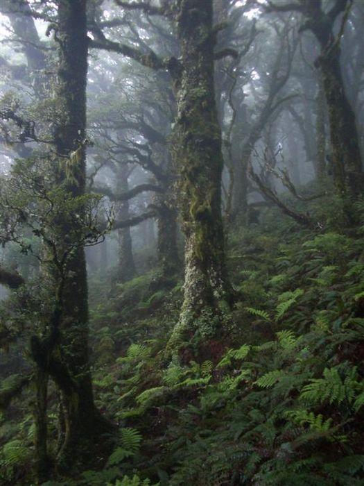 Mt. Holdsworth, forest, Tararua Range, New Zealand, cloudy, dark, photo