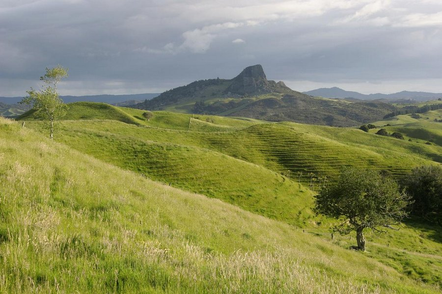 green, pastures, Northland, New Zealand, region, terraced, hills, grassy, photo