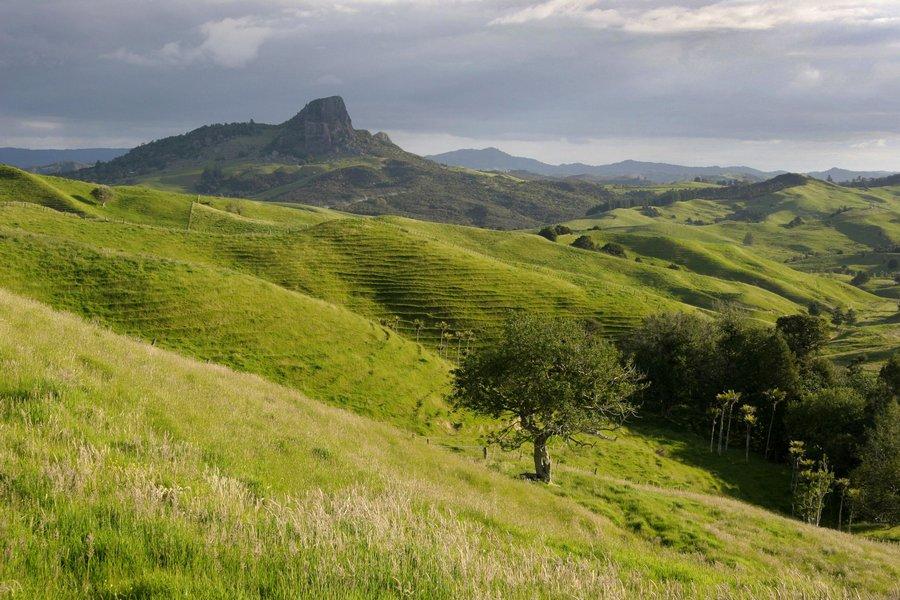 Northland, grassy, hill, green, sheep, pasture, fields, landscape, New Zealand, photo