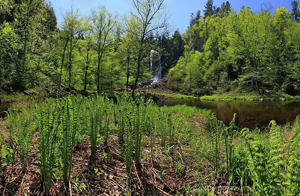 OK Slip Falls,ferns,fiddlehead ferns,springtime,spring,2012,green,Hudson River Gorge,waterfall,Adirondack Park,Adirondac, photo