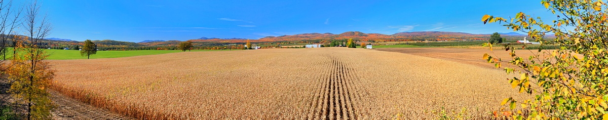 Peru, NY,Plattsburgh,corn,fields,row,apple,farm,Whiteface Mt,Adirondack,northeastern,treetop,rows,farms,, photo
