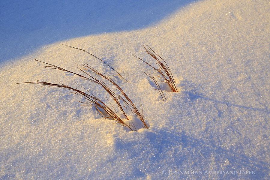 Prospect Mt,Lake George,snow grass,grasses,snow,winter,Prospect Mt grasses,Adirondack Park, photo