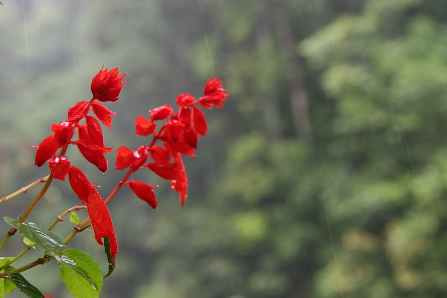 rain,droplets,streaking,past,falling,wildflowers,red,Queensland,Australia, photo