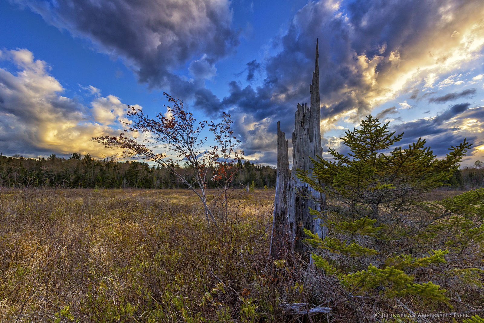 Rock Lake,bog,tree stump,stump,dogwood,dramatic sky,wetlands,Rock Lake bog tree stump,Adirondacks,Johnathan Esper, photo